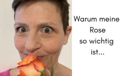 Warum die Rose, meine Rose so wichtig ist…